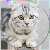 testimonial kitten
