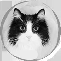 Testimonial cat