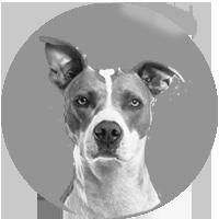 /testimonial dog
