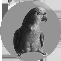 Testimonial bird